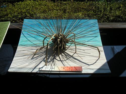 L'Ikebana dans les parcs