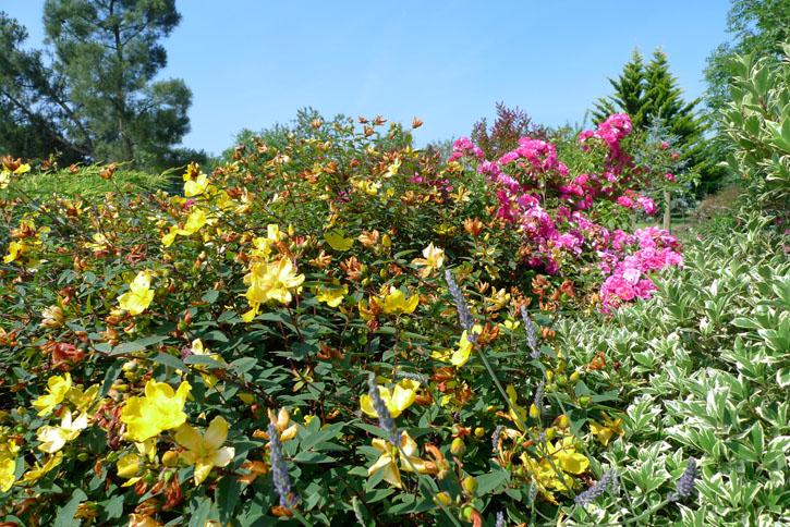 Juillet-roses