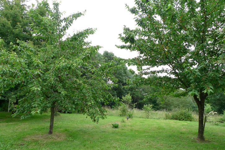 Juin-Cerisiers